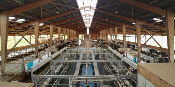 Bâtiment structure bois vaches laitières sur logettes