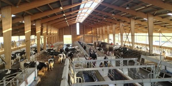 Faîtage ventilé translucide bâtiment vache laitière